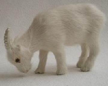 Bild von Ziege fressend weiss