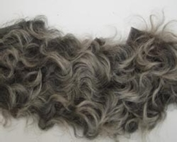 Bild von Fellperücke grau kraus kurz